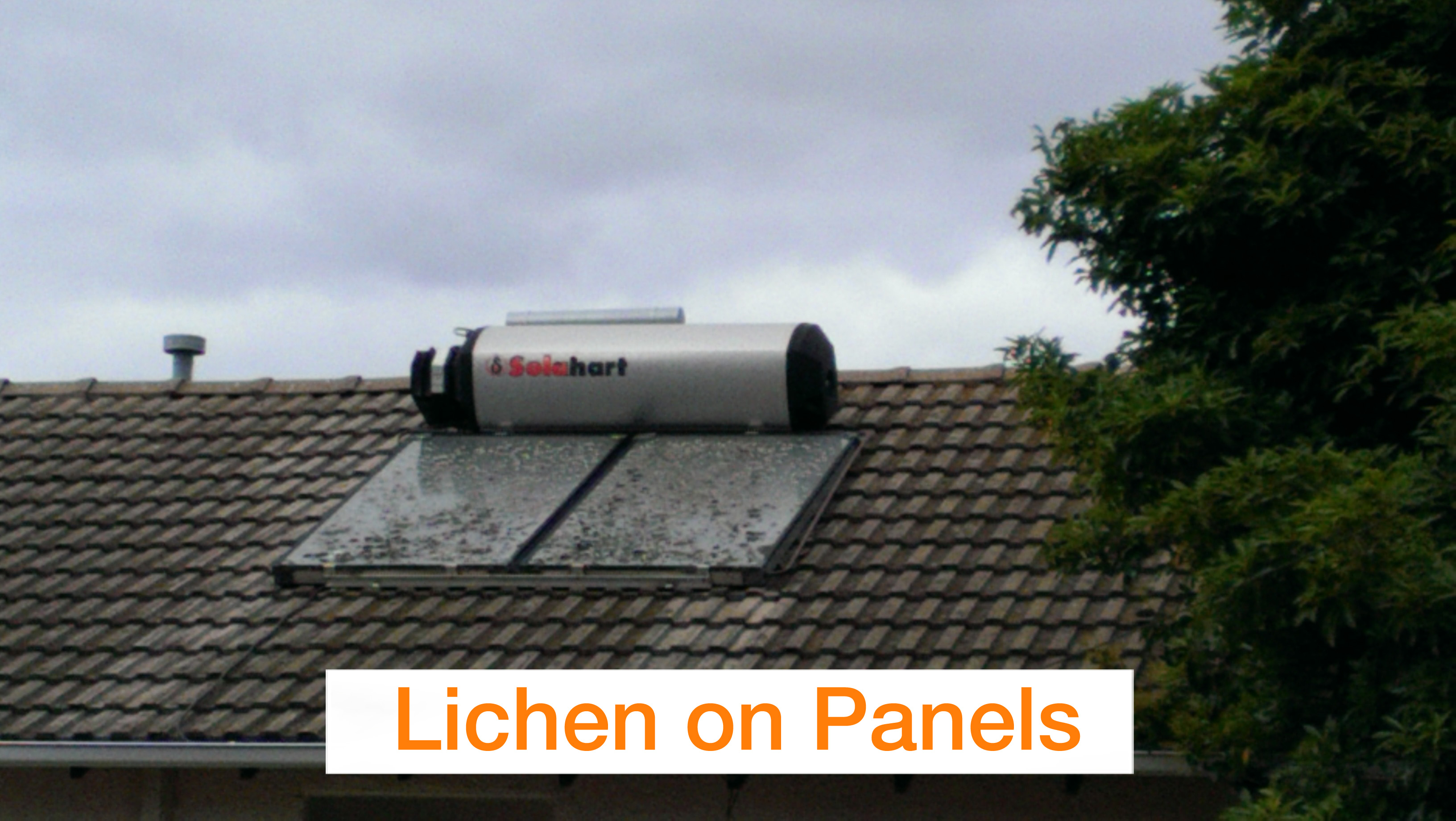 Lichen on Panels